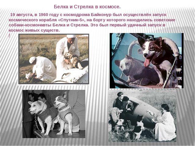 Белка и Стрелка в космосе. 19 августа, в 1960 году с космодрома Байконур был...
