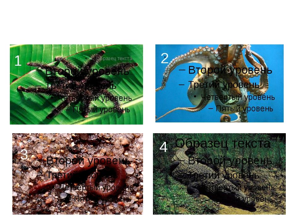 Задание 2 К какой среде обитания вы отнесете следующие организмы? 1 2 3 4