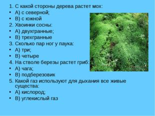 1. С какой стороны дерева растет мох: A) с северной; B) с южной 2. Хвоинки со
