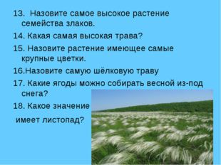 13. Назовите самое высокое растение семейства злаков. 14. Какая самая высокая