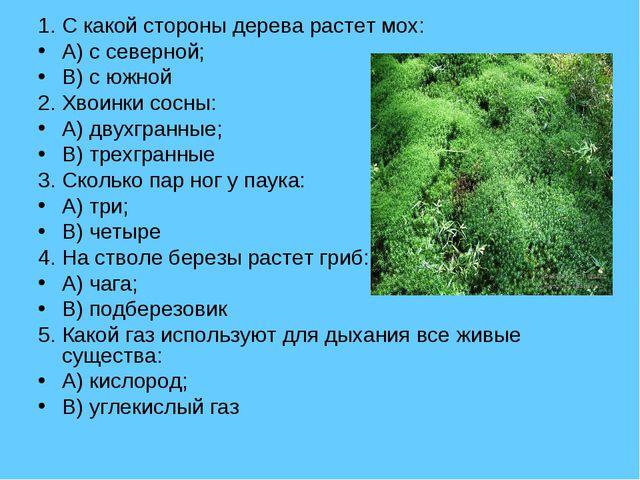 1. С какой стороны дерева растет мох: A) с северной; B) с южной 2. Хвоинки со...