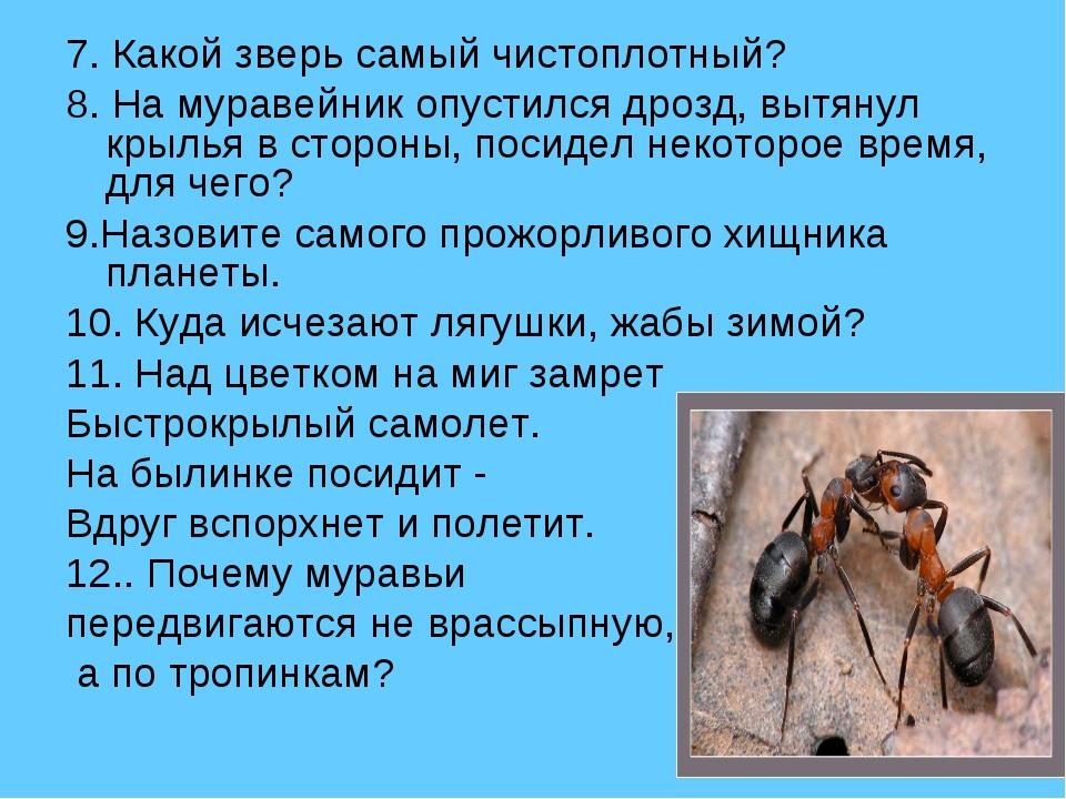 7. Какой зверь самый чистоплотный? 8. На муравейник опустился дрозд, вытянул...