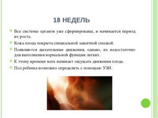 18 НЕДЕЛЬ Все системы органов уже сформированы, и начинается период их роста.