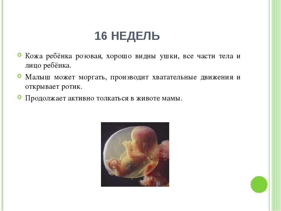 16 НЕДЕЛЬ Кожа ребёнка розовая, хорошо видны ушки, все части тела и лицо ребё...