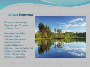 Флора Карелии В растительном мире Карелии преобладают хвойные леса. Основные