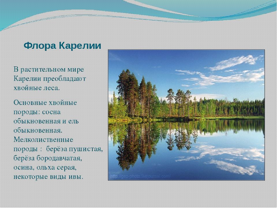 Флора Карелии В растительном мире Карелии преобладают хвойные леса. Основные...