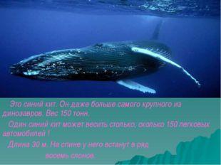 Это синий кит. Он даже больше самого крупного из динозавров. Вес 150 тонн.