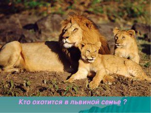 Кто охотится в львиной семье ?          Кто охотится в львиной семье ?