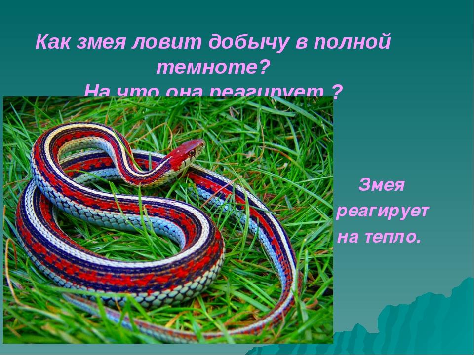 Как змея ловит добычу в полной темноте? На что она реагирует ?...