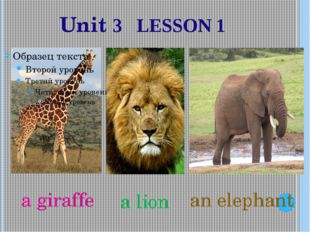 Unit 3 LESSON 1 a giraffe a lion an elephant