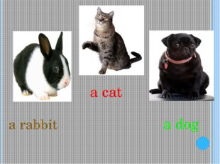 a rabbit a cat a dog