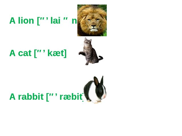 A lion [ə' lai ə n] A cat [ə' kæt] A rabbit [ə' ræbit]