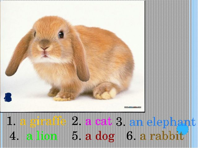 1 2 3 4 5 6 3. an elephant 1. a giraffe 2. a cat 4. a lion 5. a dog 6. a rabbit