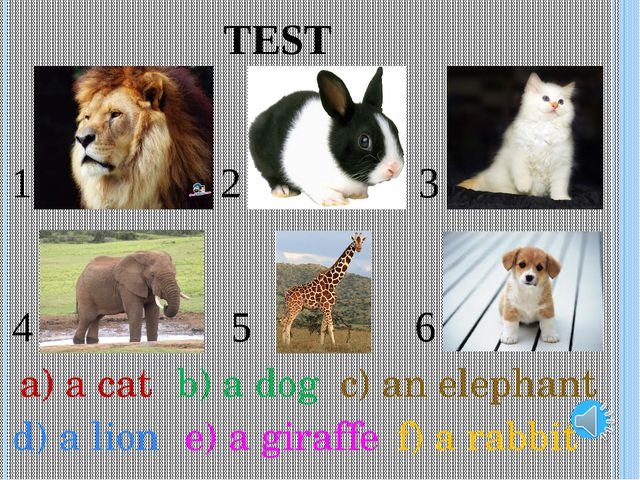 TEST 1 2 3 4 5 6 f) a rabbit a) a cat b) a dog c) an elephant d) a lion e) a...