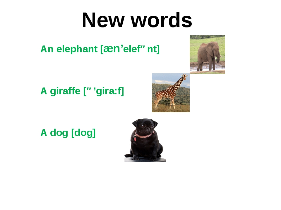 An elephant [æn'elefənt] A giraffe [ə'gira:f] A dog [dog] New words