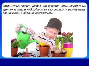 Дима очень любит цветы. Он посадил новый горшечный цветок и стали наблюдать з