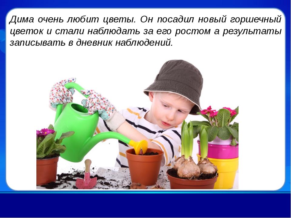 Дима очень любит цветы. Он посадил новый горшечный цветок и стали наблюдать з...