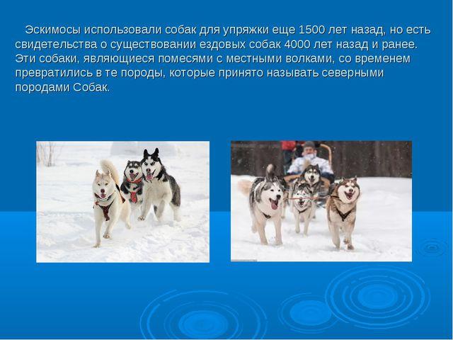 Эскимосы использовали собак для упряжки еще 1500 лет назад, но есть свидетел...