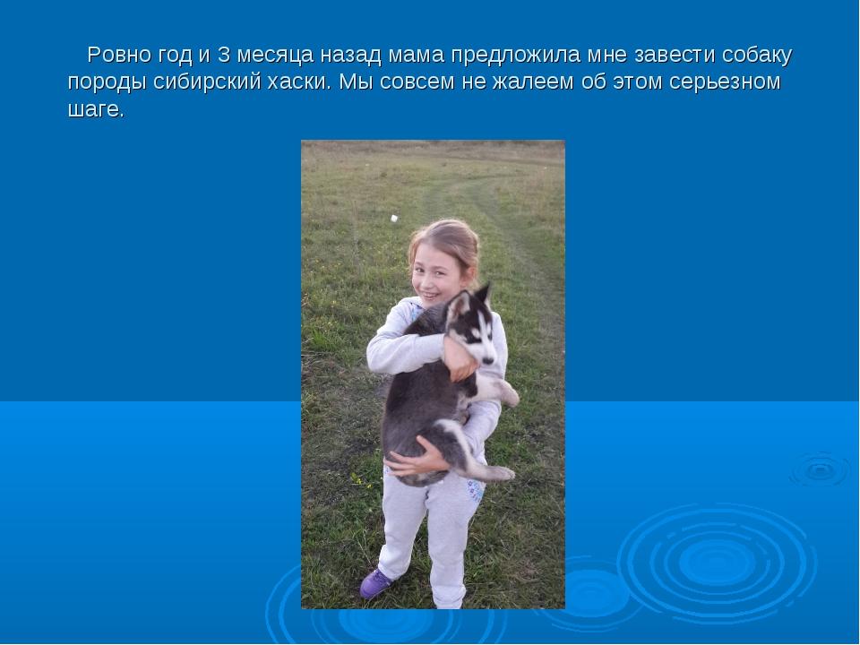 Ровно год и 3 месяца назад мама предложила мне завести собаку породы сибирск...