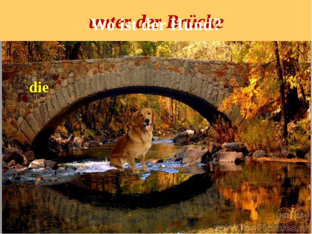 unter der Brücke die Wo ist der Hund?