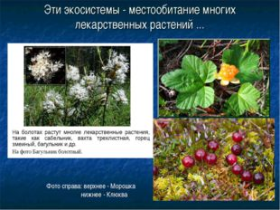 Эти экосистемы - местообитание многих лекарственных растений ... Фото справа: