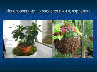 Использование - в озеленении и флористике