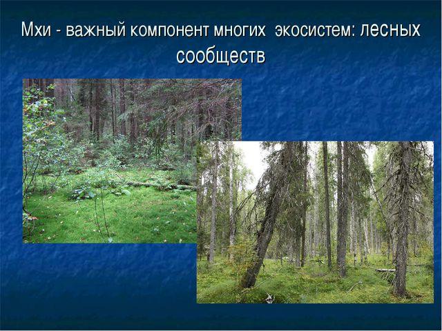 Мхи - важный компонент многих экосистем: лесных сообществ