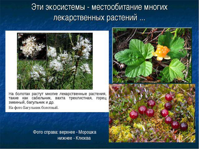 Эти экосистемы - местообитание многих лекарственных растений ... Фото справа:...