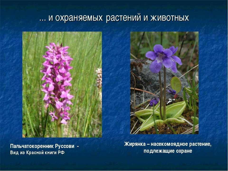 ... и охраняемых растений и животных Жирянка – насекомоядное растение, подлеж...