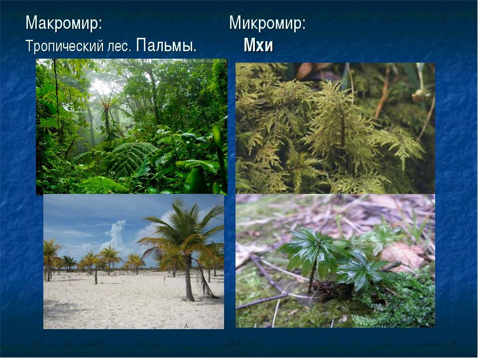 Макромир: Микромир: Тропический лес. Пальмы. Мхи