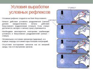 Условия выработки условных рефлексов Условные рефлекс создается на базе безус