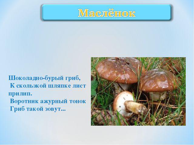 Шоколадно-бурый гриб, К скользкой шляпке лист прилип. Воротник ажурный то...