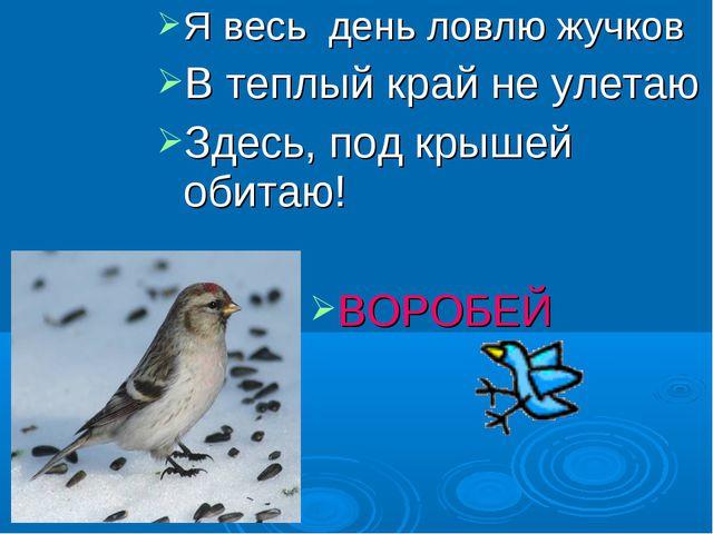 Я весь день ловлю жучков В теплый край не улетаю Здесь, под крышей обитаю! ВО...
