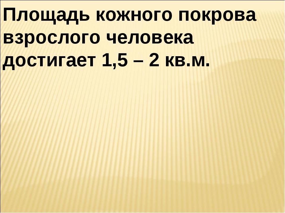 Площадь кожного покрова взрослого человека достигает 1,5 – 2 кв.м.