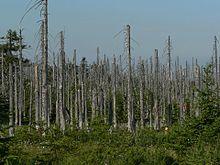 http://himi.jofo.ru/data/userfiles/4988/images/557581-220px-acid_rain_woods1.jpg