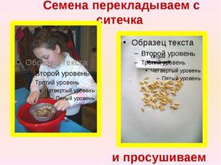 Семена перекладываем с ситечка и просушиваем