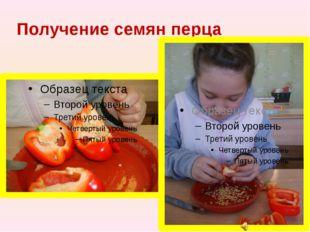 Получение семян перца