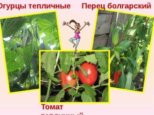 Огурцы тепличные Перец болгарский Томат тепличный