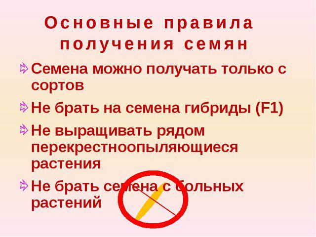 Основные правила получения семян Семена можно получать только с сортов Не бр...