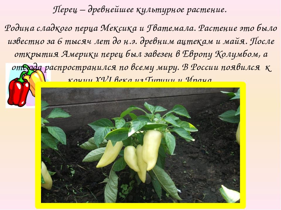 Перец – древнейшее культурное растение. Родина сладкого перца Мексика и Гвате...