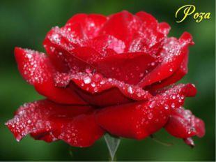 По древнегреческой легенде этот цветок родился из белоснежной пены, покрывавш
