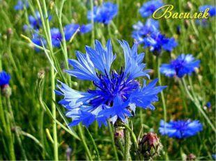 Происхождение русского названия этого растения объясняет старинное народное п