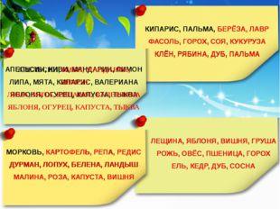 9. Сколько семян в плоде абрикоса?