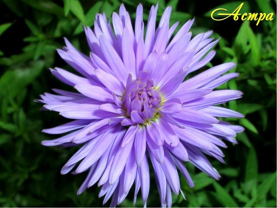 11. Какое растение называют лучшим другом туриста? Почему?
