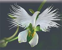 Находчивые орхидеи