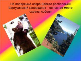 На побережье озера Байкал расположен Баргузинский заповедник – основное место