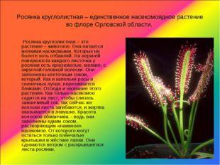 Росянка круглолистная – единственное насекомоядное растение во флоре Орловско