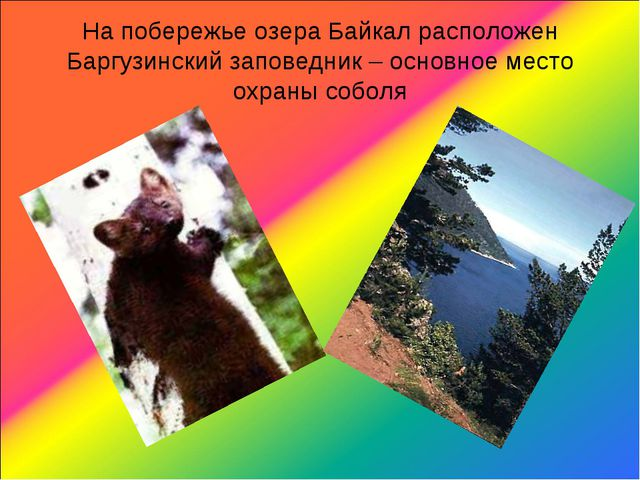 На побережье озера Байкал расположен Баргузинский заповедник – основное место...