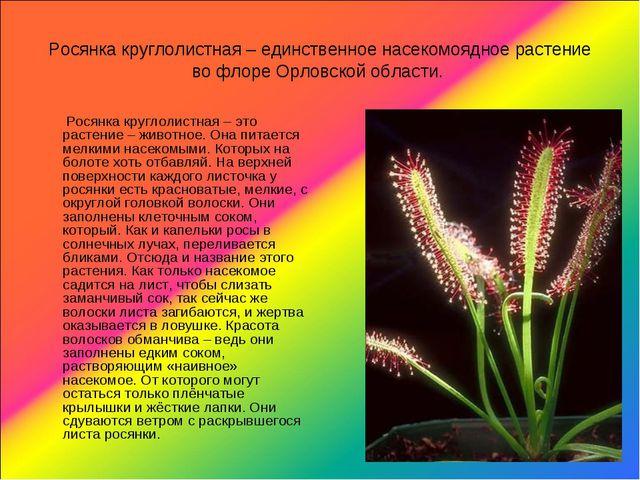 Росянка круглолистная – единственное насекомоядное растение во флоре Орловско...