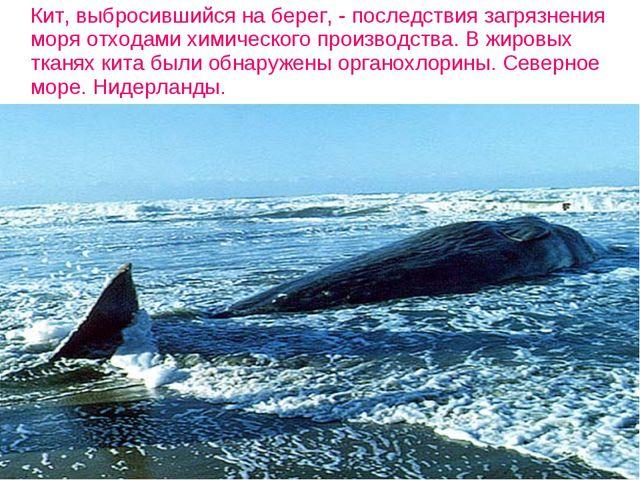 Кит, выбросившийся на берег, - последствия загрязнения моря отходами химичес...
